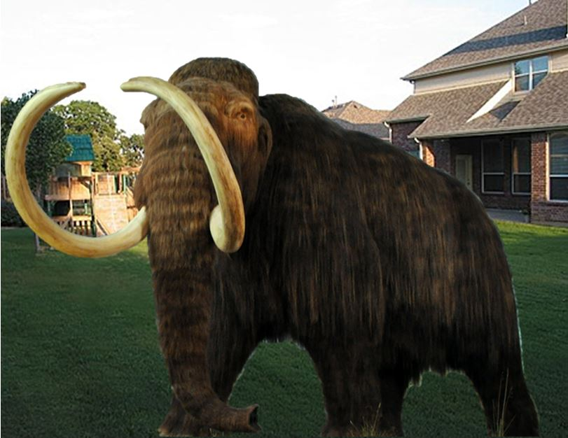 Mammoth in backyard